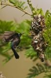 Sunbirds  6